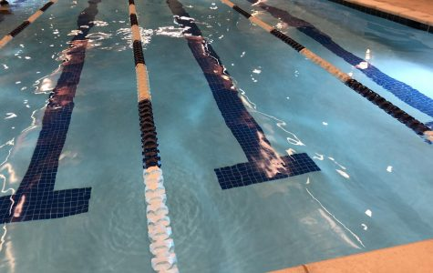 Looking into the life of a swimmer