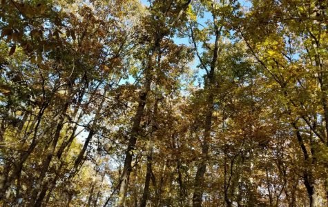 Visit Forsyth County's Sawnee Mountain Park