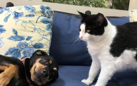 The pet someone owns can share a lot about their personality. Photo Credit: Sofie Salcedo
