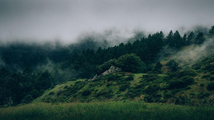 The movie takes place in an enchanted forest that is very foggy. Photo Credit: UnSplash