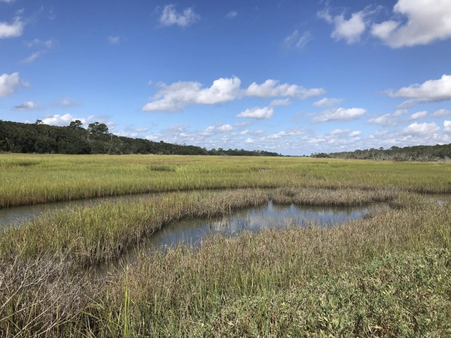 Jekyll's marshes are breathtaking. Photo Credit: Claire Mulkey