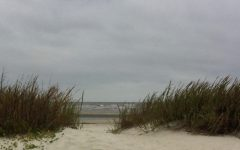 This photo was taken in the dunes on one of St Simons' many beach accesses. Photo Credit: Ansley Tanner